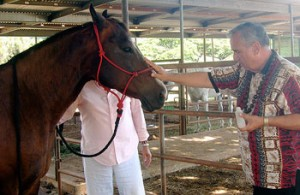 Kahu Silva performs blessing for horse and other animals